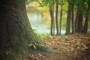 L'investissement en groupements fonciers forestiers (GFF)