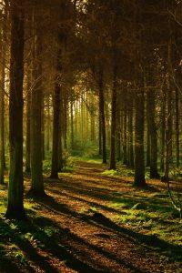 Le placement forestier